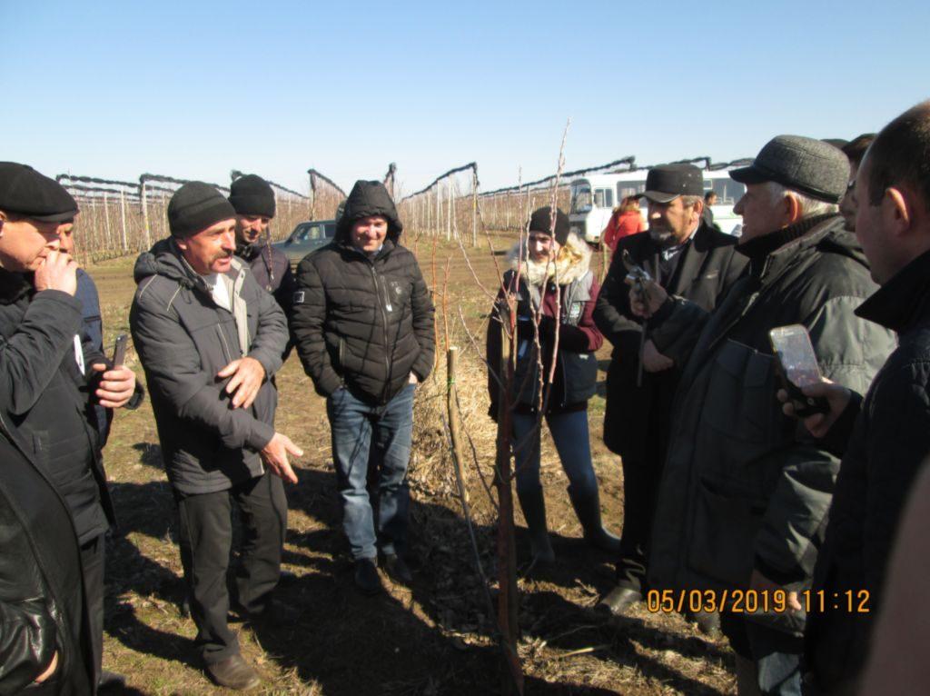 Специалист садовод Ермоленко В.Г. показывает обрезку двухлетнего сада сорта «Женева»