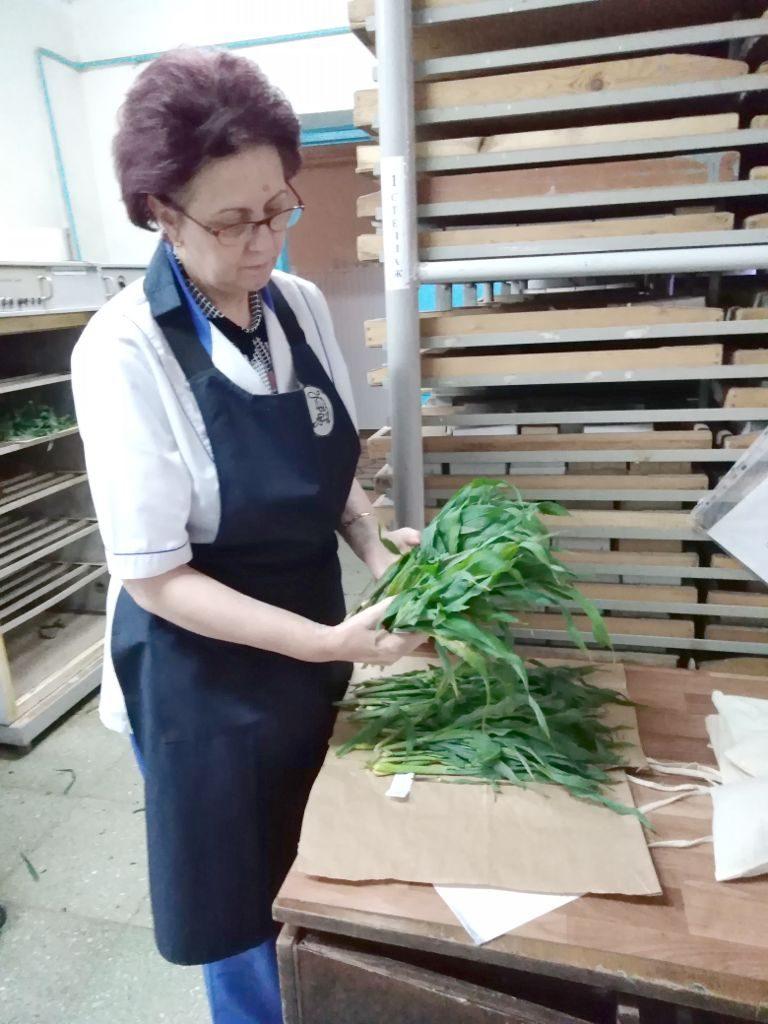Фото. Пробоподготовка растений
