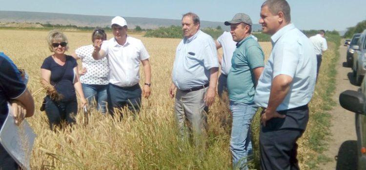Фото. Осмотр посевов зерновых культур