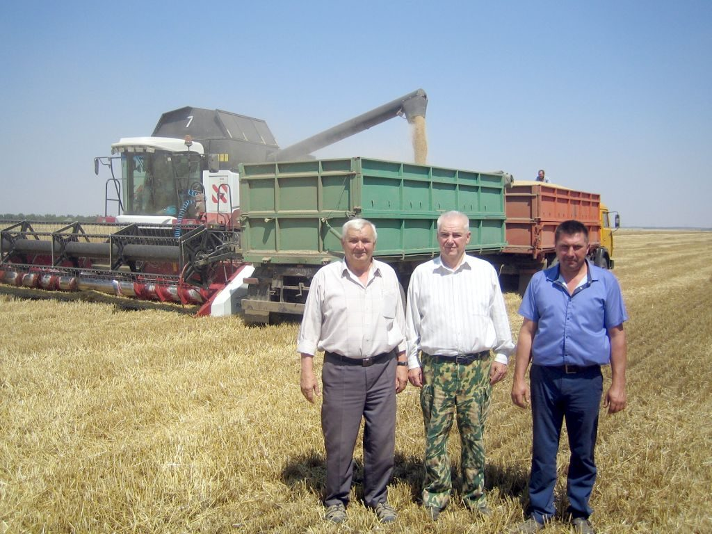 Фото. Уборка озимой пшеницы