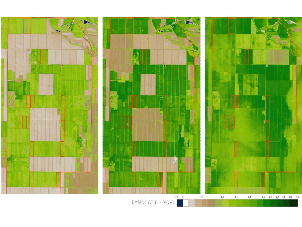 Динамика NDVI по полям хозяйства