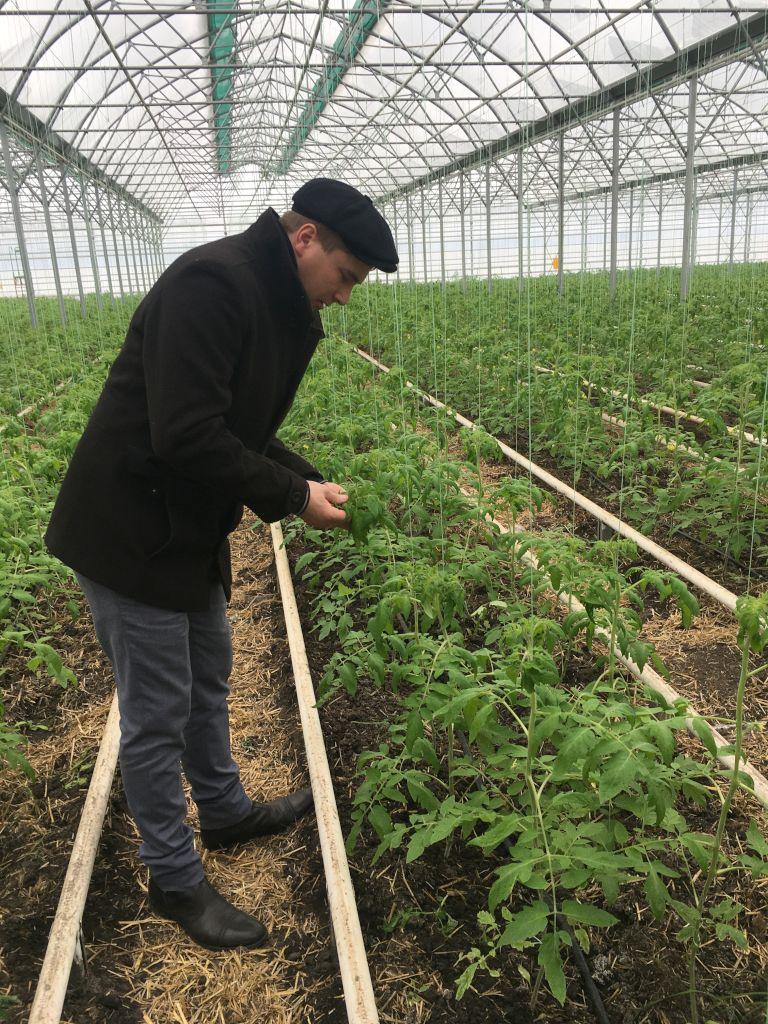 Отбор листьев растений осуществляет зав. сектора отдела МПП Олейников Александр Юрьевич
