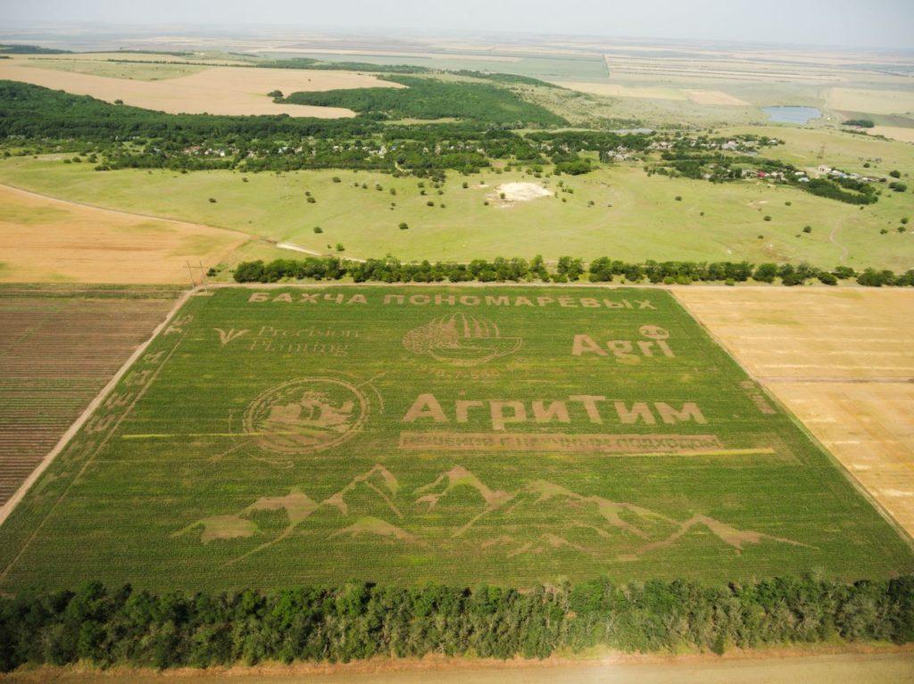 Кукурузный рисунок в КФХ «Пономарево»