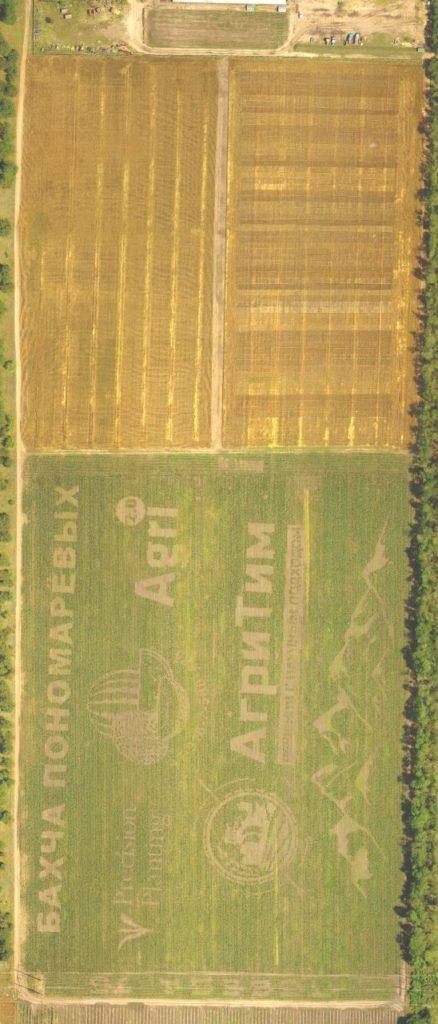 Результат сева. Сев кукурузы состоялся в конце апреля. Дата аэросъёмки 16 июня 2020 г.