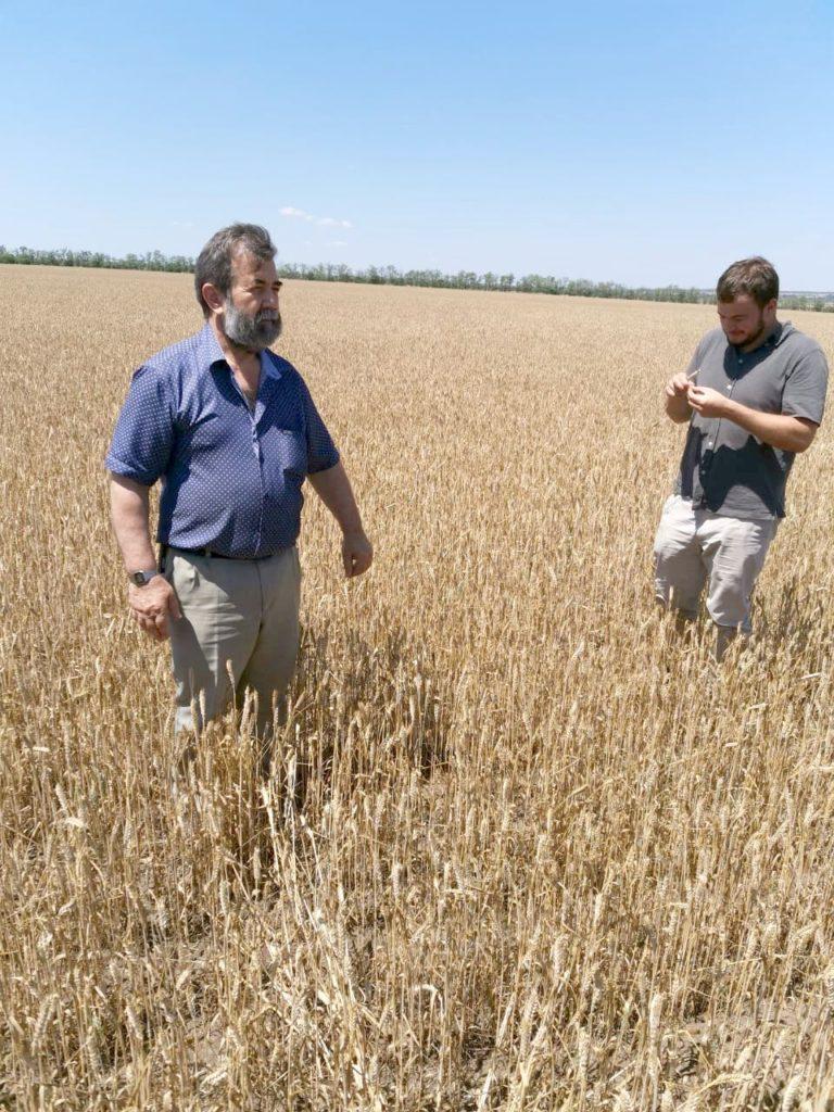 Оценка посевов озимой пшеницы