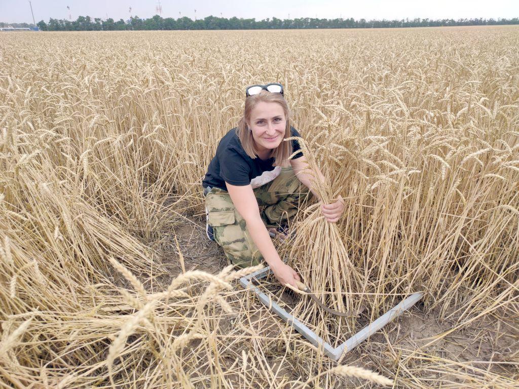 Отбор растительных образцов (озимая пшеница). Отбор проводит ведущий специалист Наталья Махалина