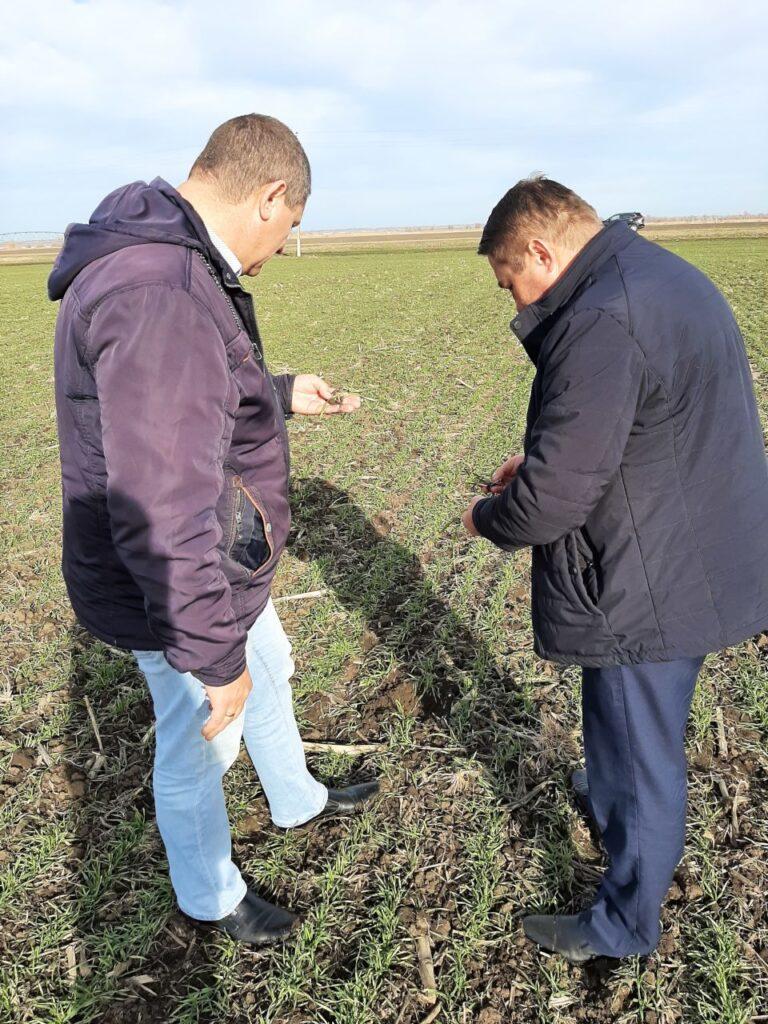 Егоров В.П. и гл. агрономом ООО «Агросахар» Красниковым А.С., проводят осмотр посевов озимых культур